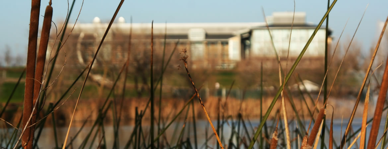View of tall grass located near waterways near UC Merced